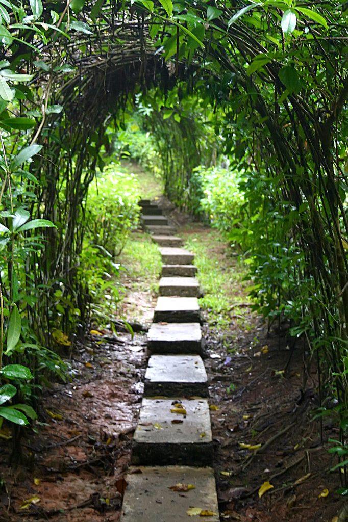 The Path Forward